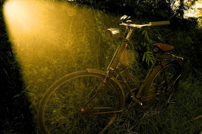 Fahrrad eines Reisbauern im Feld