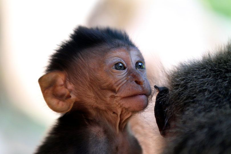 Im Affenwald von Ubud