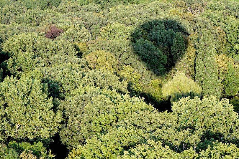 Über dem Lüchower Stadtwald