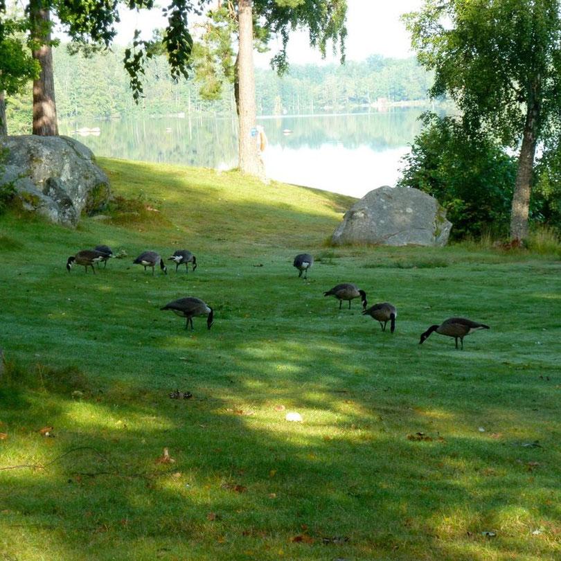Morgendliche Besucher