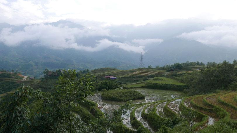 Endlose Reisfelder im Muong Hoa-Tal