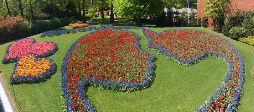 disegno di due visi e dei cuori fatto con tulipani colorati nel Keukenhof garden in Olanda