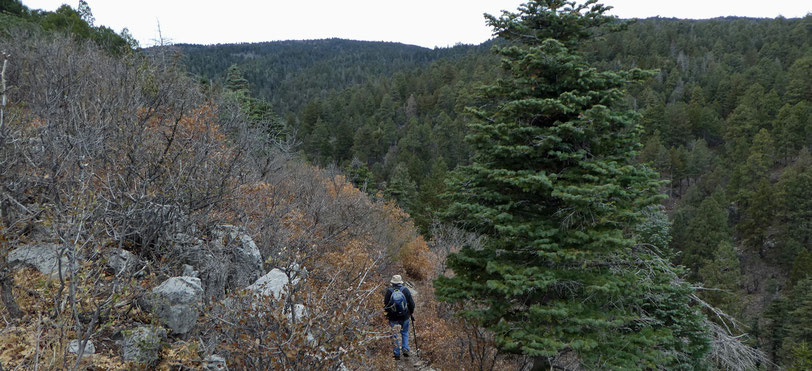 Faulty Trail, Cienega Canyon, Sandia Mountains, Cibola National Forest, hike