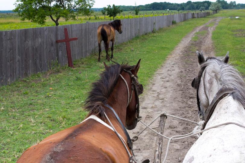 Letėjos kaimas Dunojaus deltoje ir žirgai / Foto: Kristina Stalnionytė