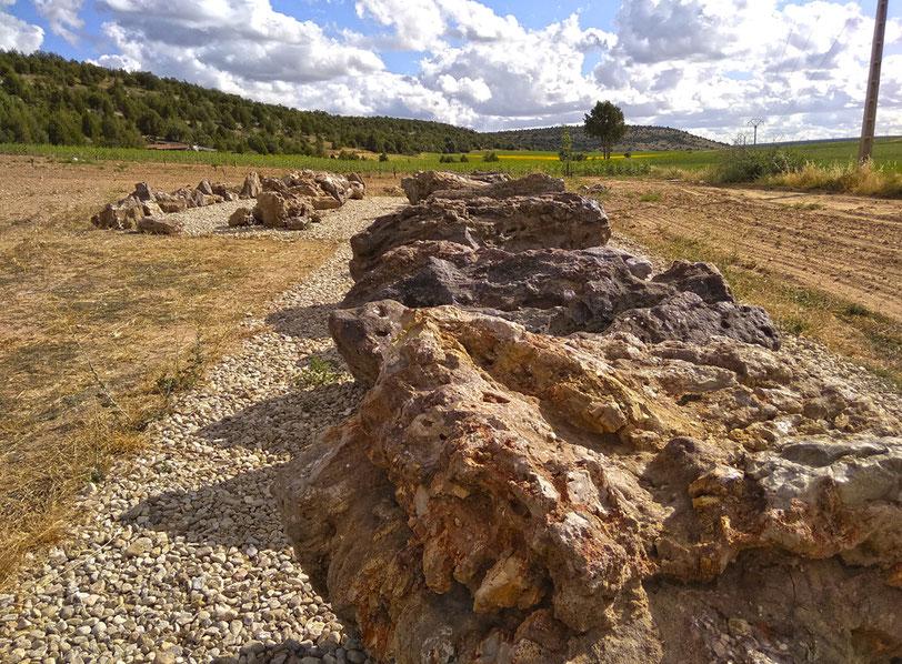 Vista de los fósiles de coníferas y el paleosuelo de Arevalillo de Cega