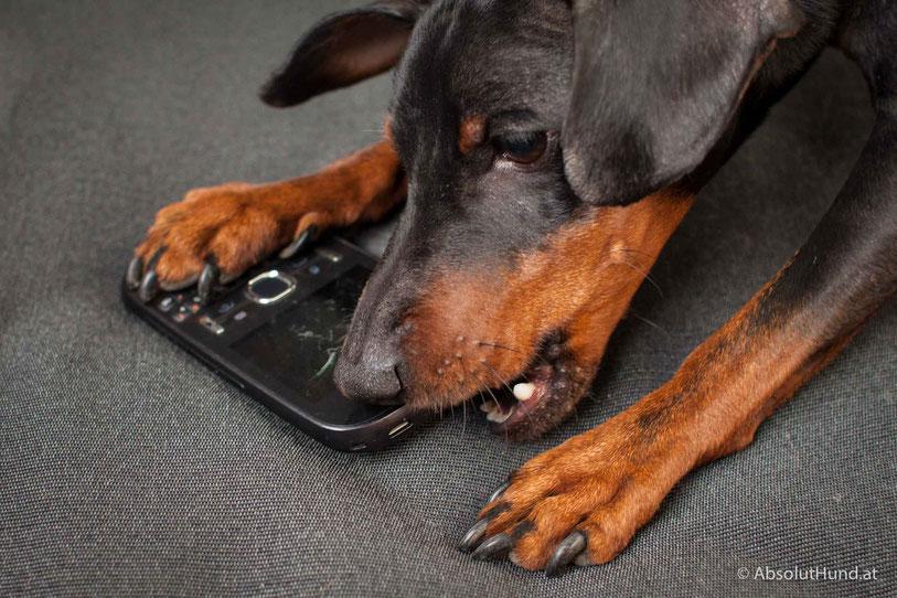Haftpflichtversicherung für den Hund - AbsolutHund.at