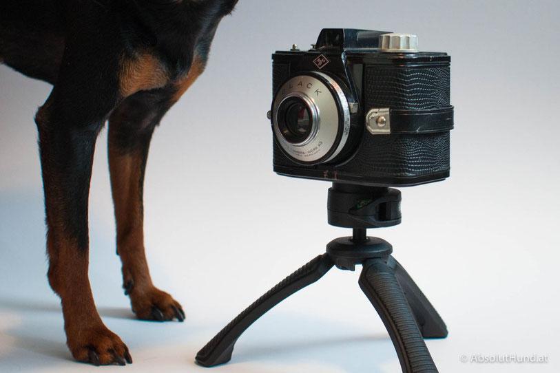 Hunde als Fotografen - AbsolutHund.at