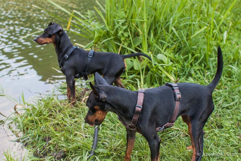 Ein Badebereich weniger für unsere Hunde