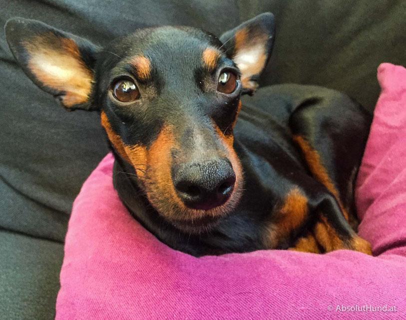 5 Tipps für Hundefotos mit dem Smartphone - AbsolutHund.at