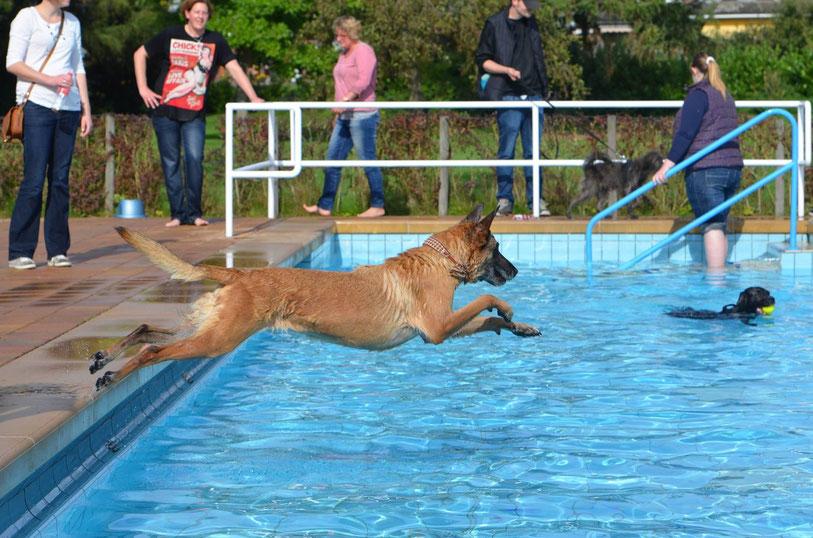 Vier Pfoten im Freibad, Ein Tag im Freibad mit Hund, - AbsolutHund.at