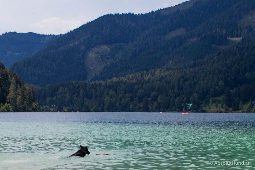 Erlaufsee, Steiermark, Österreich, Mariazell, Hund, Schwimmen mit Hund