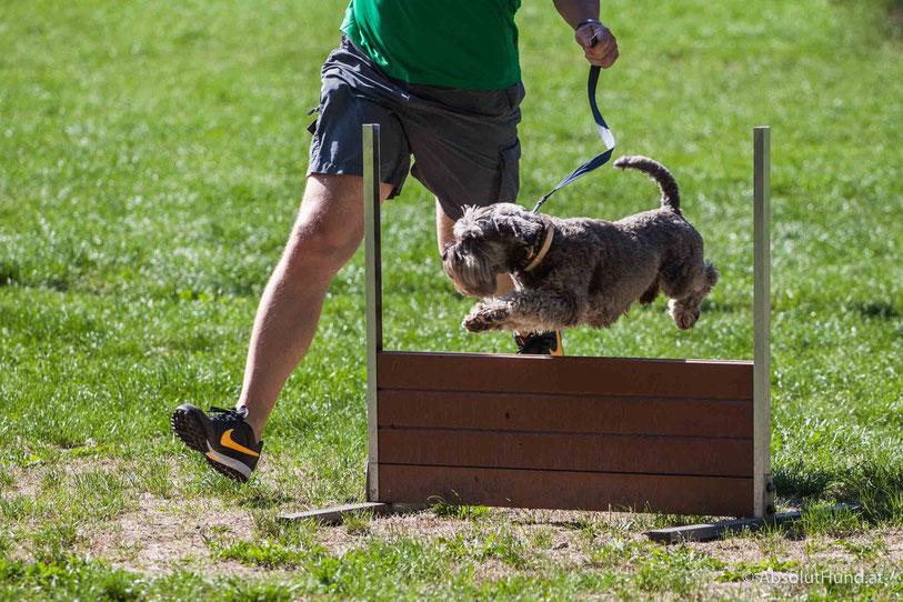 Spassturnier für Hunde, Schnauzer und Pinscher Klub Österreich