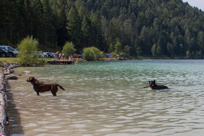 Erlaufsee, Steiermark, Mariazell, Schwimmen mit Hund