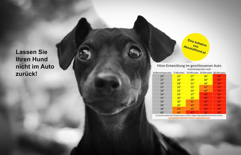 WillkommenHund.org, Hund im heißen Auto