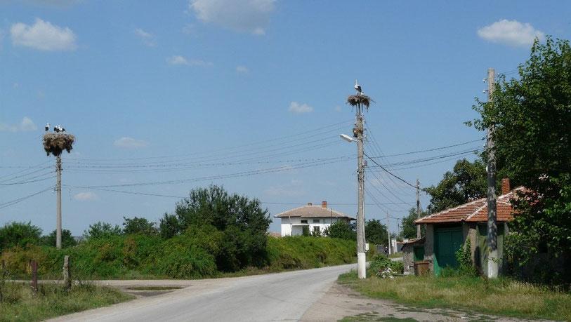 Depuis la fin de la Turquie, de nombreuses cigognes sont presentes le long de la route