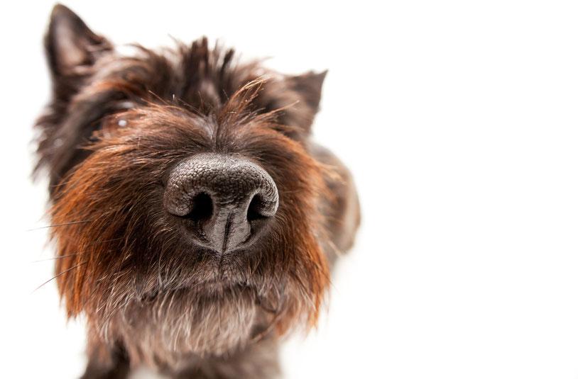 FeelGood Management Stephanie Kohlsaat · FeelGood Office Dogs @Work #myofficedog2021 - Hard Facts für Chefs.