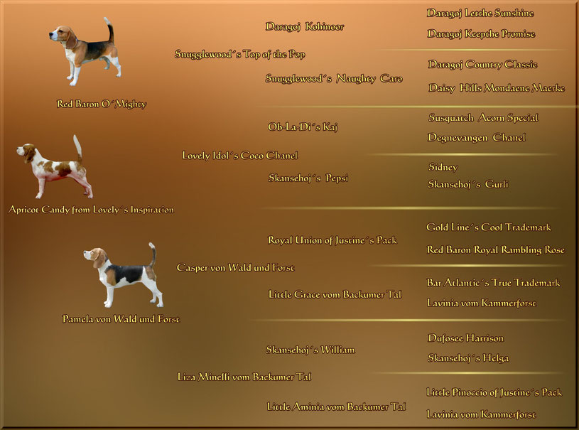 Pedigree ~ Apricot Candy from Lovely´s Inspiration