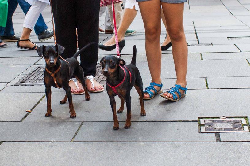3 Gassi-Geschichten, unglaublich aber wahr, Hund