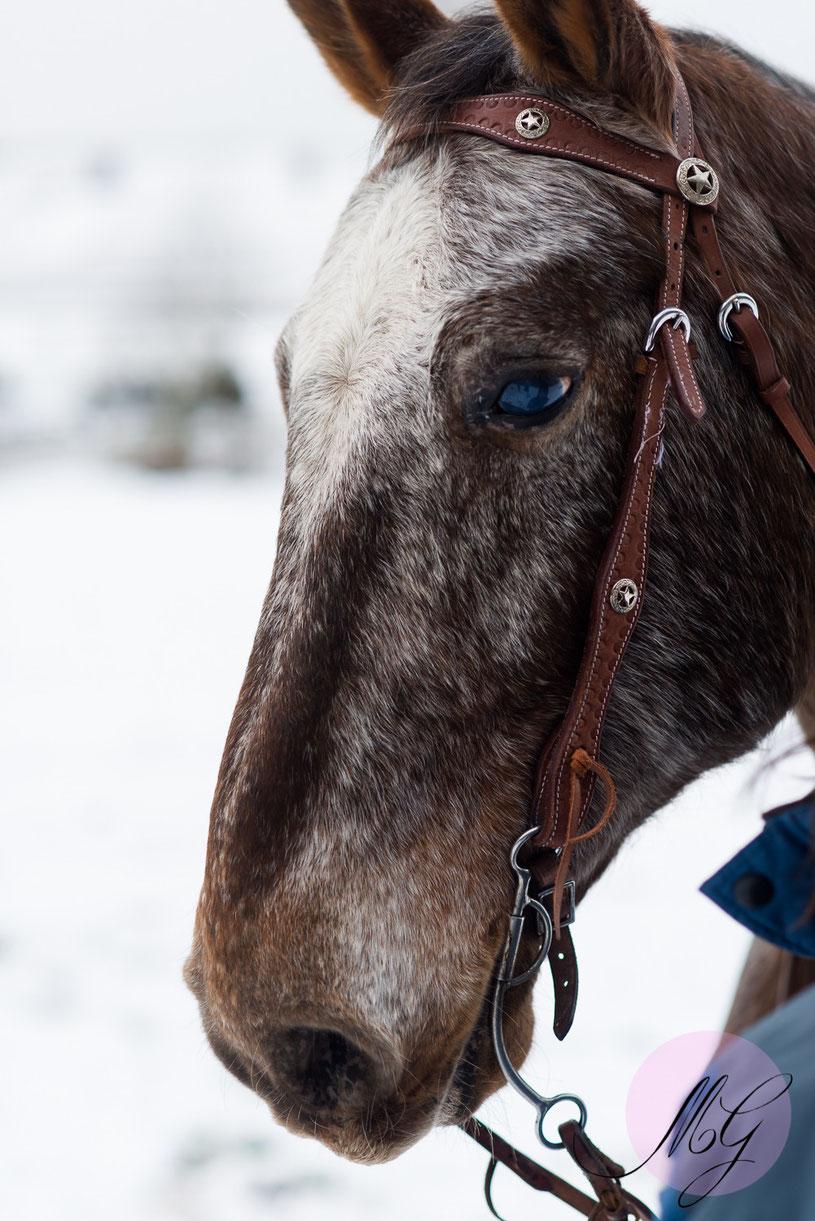 Wintershooting, Winterfotos, Schneebilder, Portrait, jasmin Baldauf