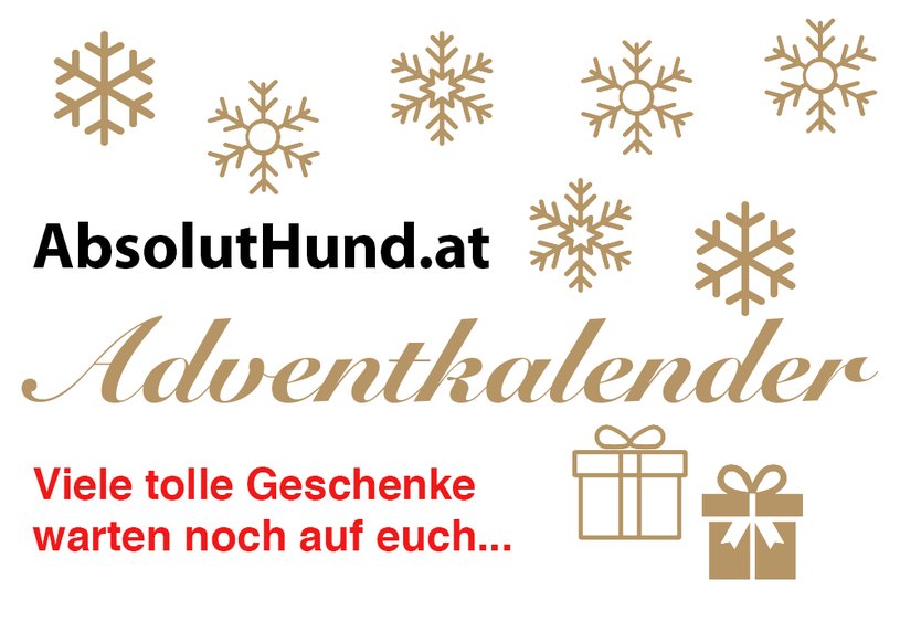 Adventskalender AbsolutHund.at