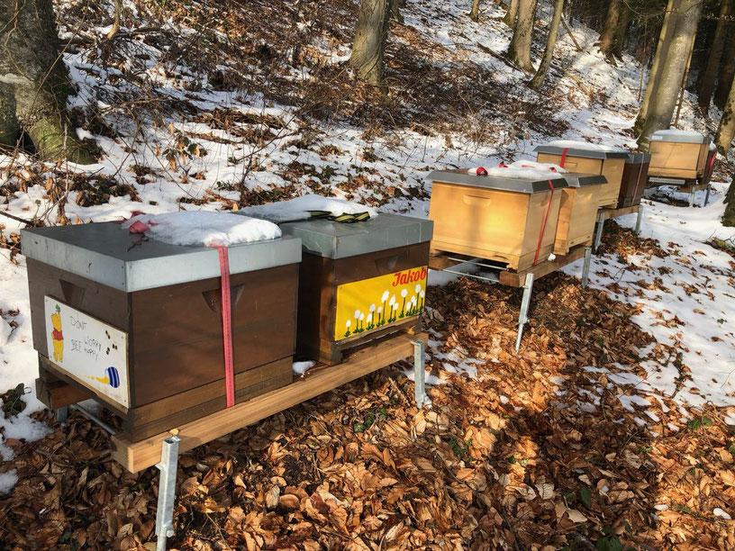 Eingeschneiter Bienenstand