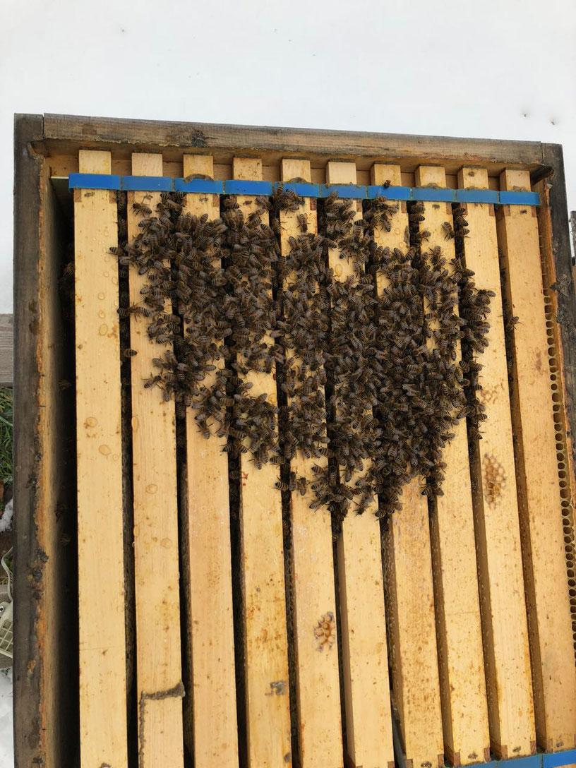 Bienen in der Wintertraube