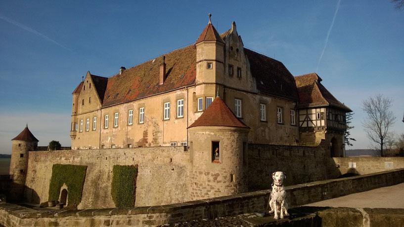 Somora´s Juniper Dream auf der Burg Stettenfels Ende Dezember 2015