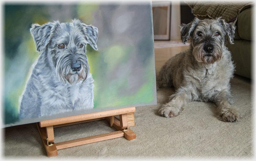 Hundezeichnung, Hund Zeichnung, Tierzeichnung, Pastellzeichnung, Schnauzer, pet portrait, pet drawing
