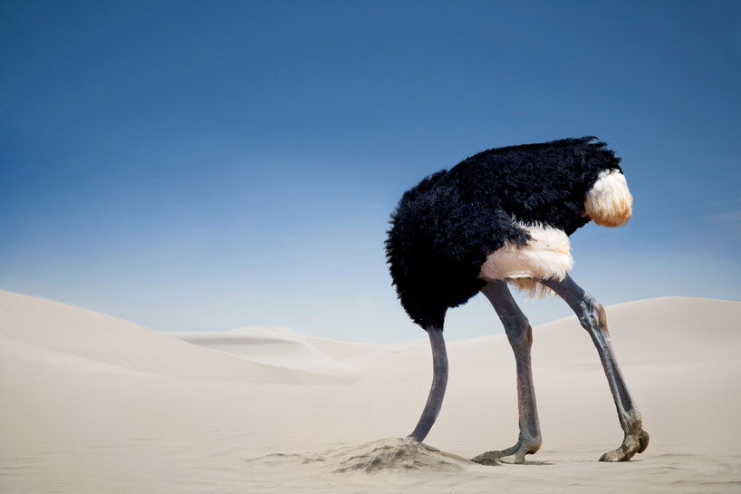 This ostrich has made a conscious decision to do nothing and bury it's head in the sand!