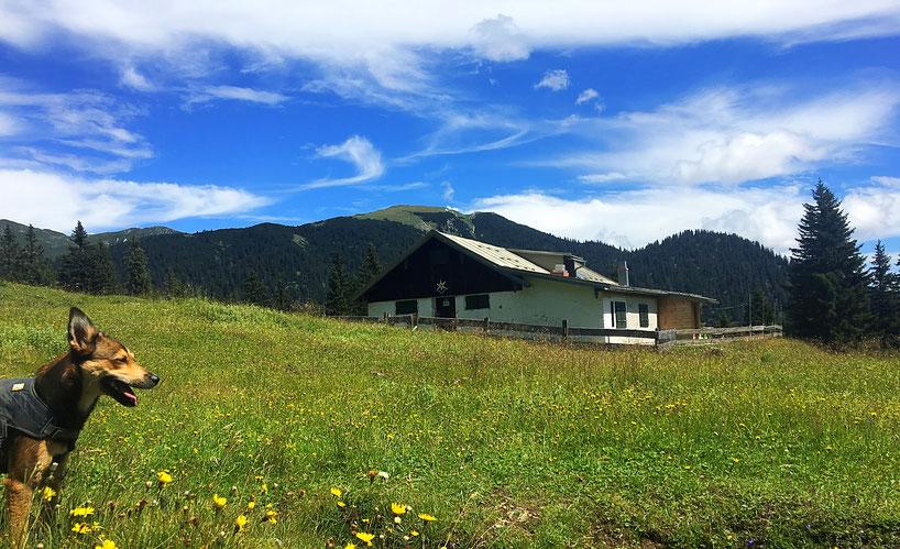 Hirschwängalpe am Ochsenälpeleskopf in den Ammergauer Alpen