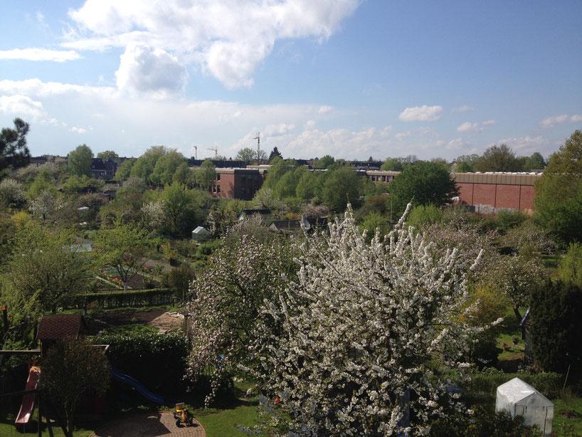 blühendes Geistviertel im Frühling aus der Bienenperspektive