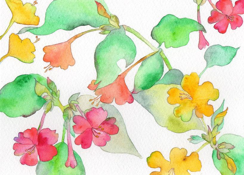水彩画「夏おしろい」