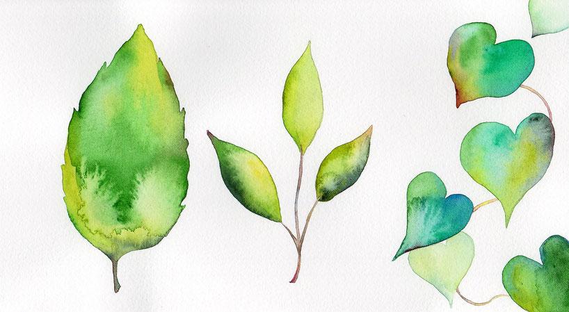水彩画「緑葉の図」