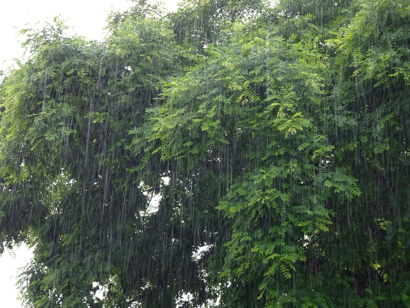 En haut ciel gris rayé d'une éternelle pluie