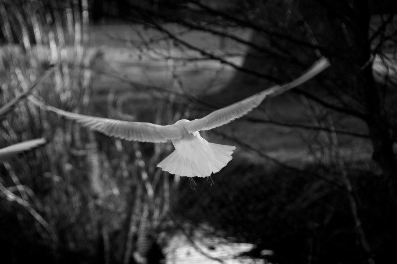 Aufgeflogen