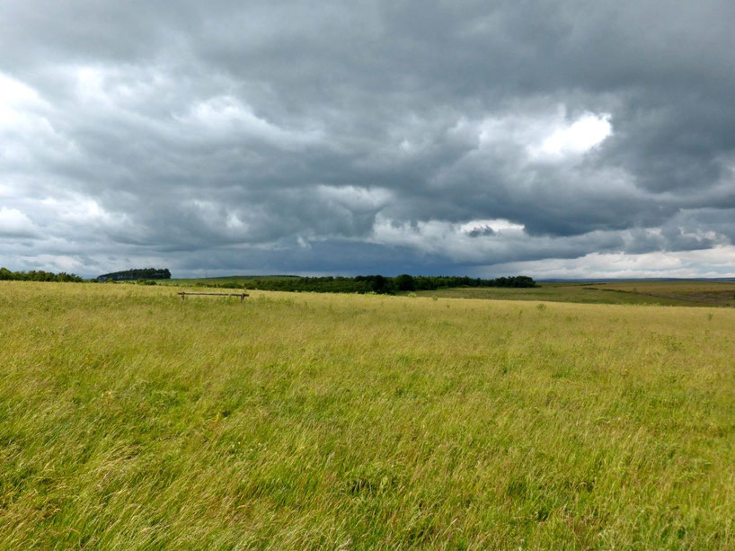 Grassy field on the ridge