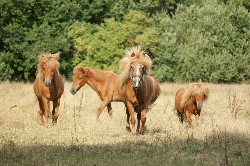 Pferdeherde - Mobile Tierheilpraxis Alexandra Link Schleswig-Holstein