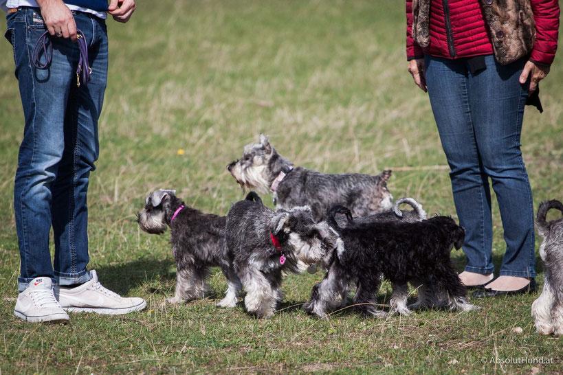 Warum man diese drei Hundehalter-Typen besser meidet