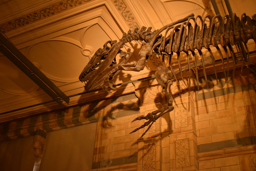 Iguanodon, Natural History Museum, London