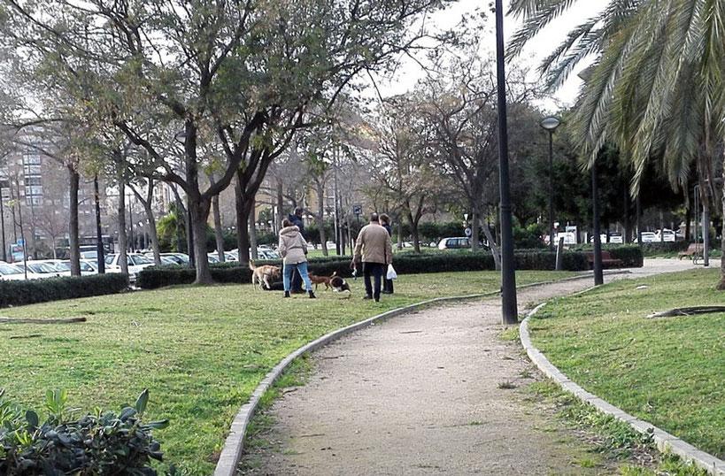 Perros  en parques y jardines  en la Ciudad de las Artes y de las Ciencias en València  sin correa sueltos y sin bozal, heces sin recoger, suciedad y peligro para la salud.