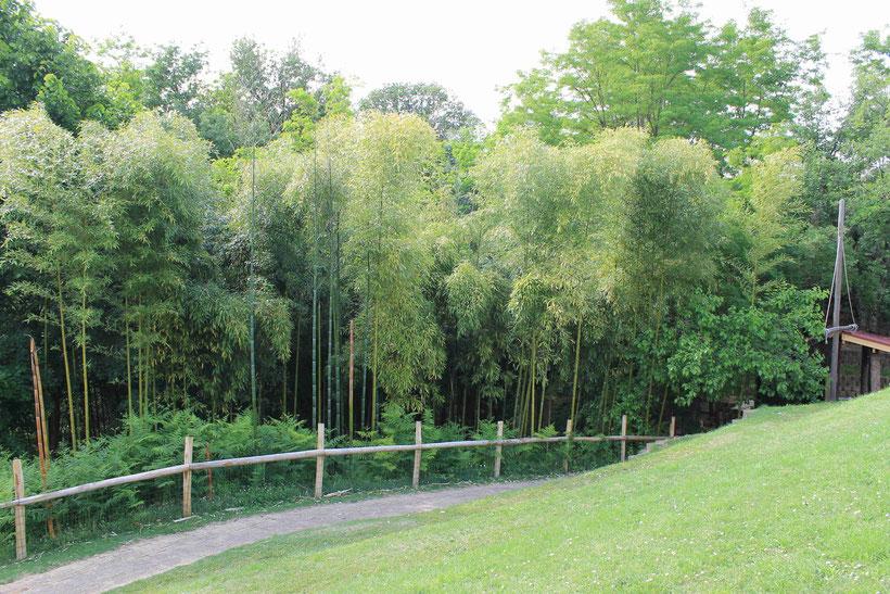 Forêt de Bambou