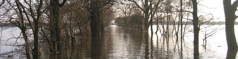 Hoogwater over de Rijnsteeg in de Amerongse Bovenpolder, januari 2003