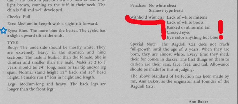 Ragdoll Standard von Ann Baker- Ragdoll ist eine POINTKATZE mit Blauen Augen !