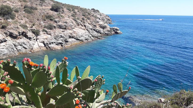 Cactus, fleurs, mer, criques, galets, roses espagne