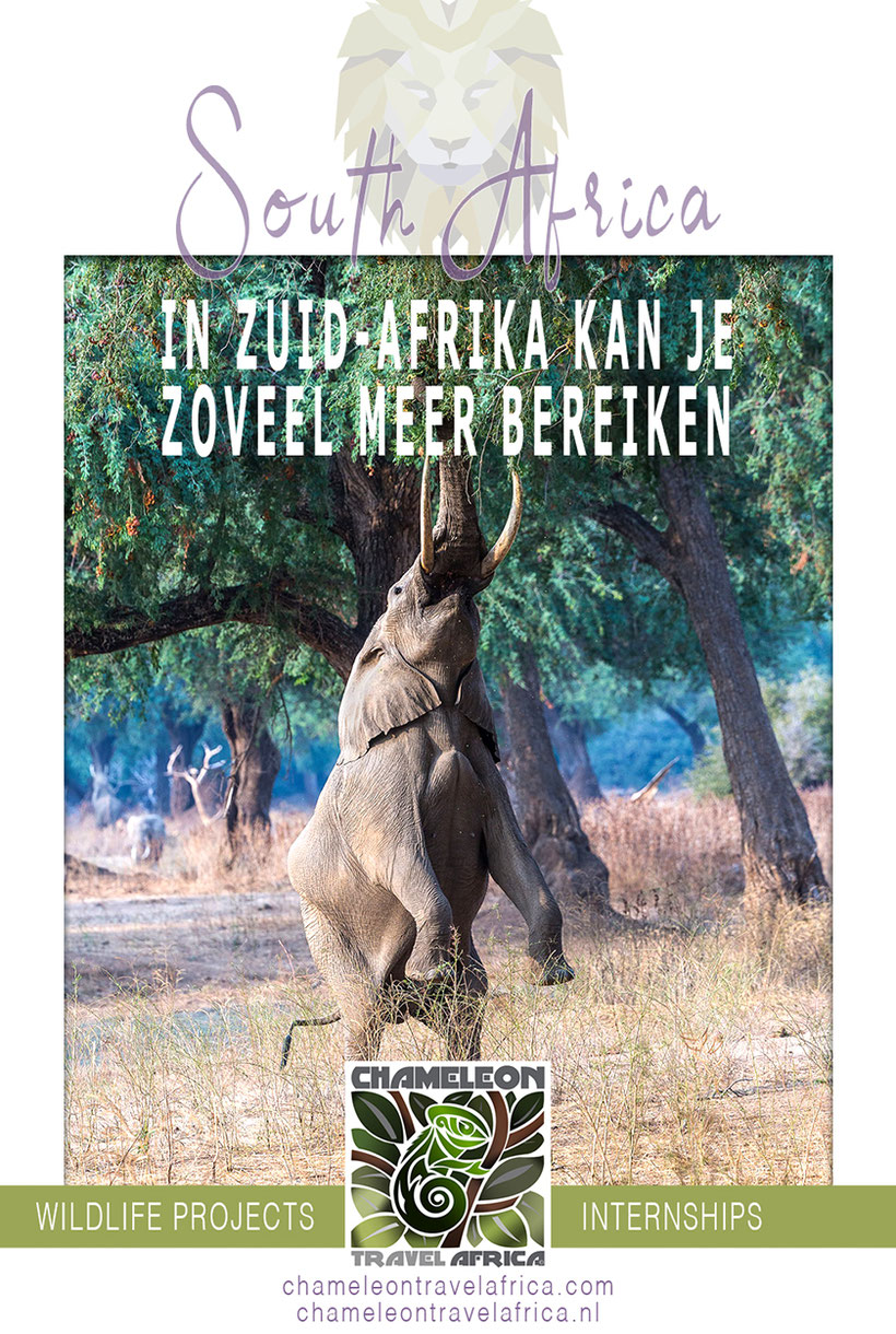 Vrijwilliger of stagiair in Zuid-Afrika