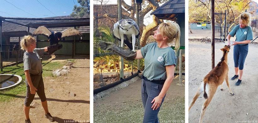 Vrijwilliger met gier en hert in Zuid-Afrika