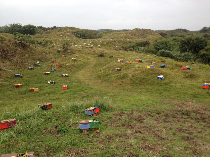 Hunderte von Begattungskästchen auf der Belegstelle Baltrum