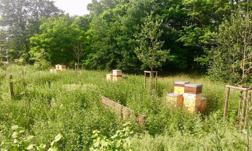 Unser Bienenstand in Hannover Misburg