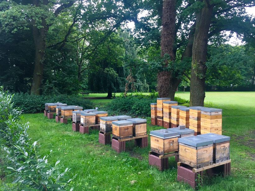 Unser Bienenstand in Hannover Bult