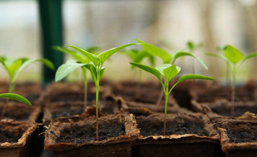 Die besten Gartenbücher über Englische Gärten: Bücher über das Gemüsegärtnern und zur Selbstversorgung